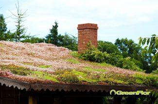 Dach zielony – czy warto?