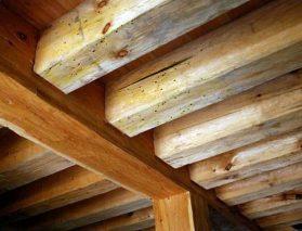 Tytan Impregnat - skuteczna walka ze szkodnikami w drewnie