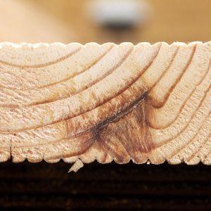 Fot. 2. Zabitka zarośnięta – przykład pierwotnej wady drewna.