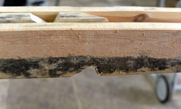 Niecertyfikowane drewno montujemy na własną odpowiedzialność w konstrukcji dachu, warto poznać konsekwencje!